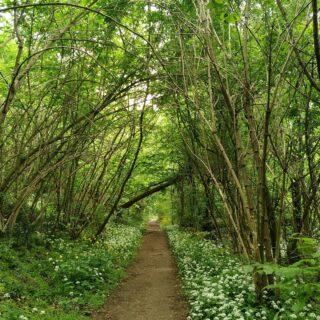 #collieuganei #green #primavera #visitveneto