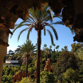 #realalcazardesevilla #giardini  #garden #realalcazar #siviglia🇪🇸 #espagna #seville #spagna
